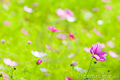 Flowers in grass green