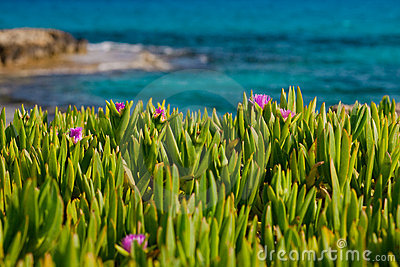 Flowers in grass near sea