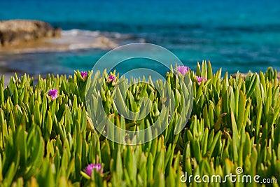 Flowers in grass near sea