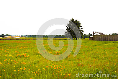 Flowers and grass and tree on colorfu summer meadow