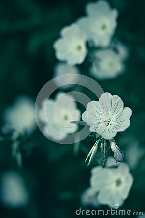 Flowers on a green background