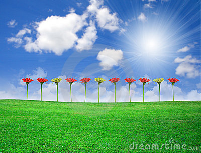 Flowers on green field