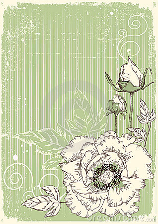 Flowers grunge postcard with peonies