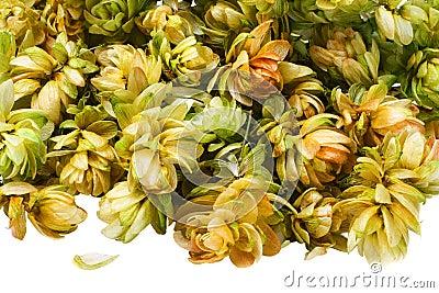 Flowers hop