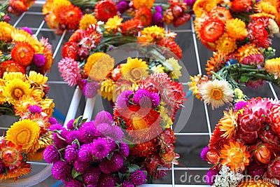 Flowers of immortelle