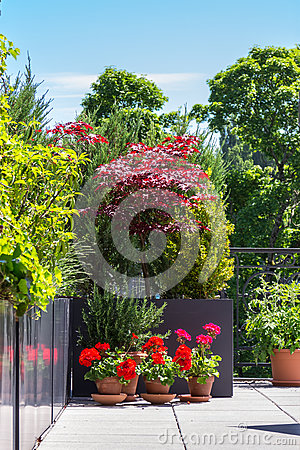 Free Flowers In Terrace Garden Royalty Free Stock Image - 31709866