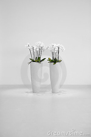 Free Flowers In Vase Royalty Free Stock Photos - 23355698