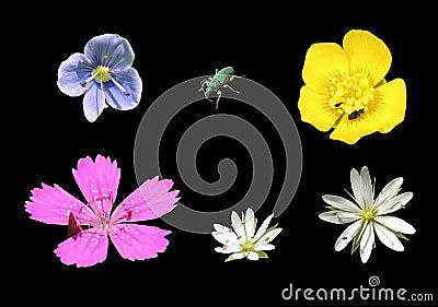 Flowers insulation