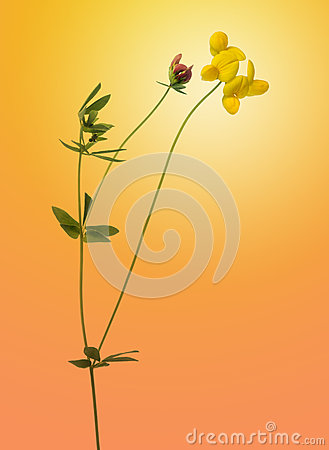 Flowers isolated on orange gradient background