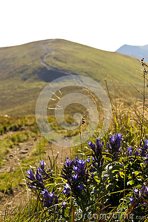 Flowers with landscape.