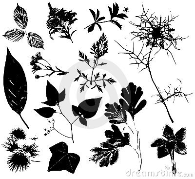 Free Flowers Leaves Vectors 3 Stock Photography - 3942972