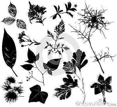 Flowers Leaves Vectors 3