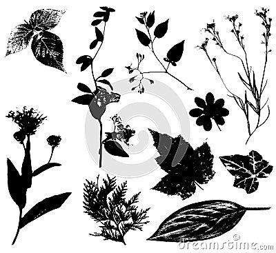Flowers Leaves Vectors Black 2