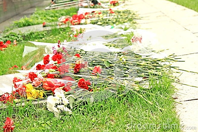 Flowers lie on the ground