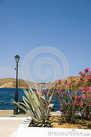 Flowers Mediterranean sea harbor Ios Greek islands