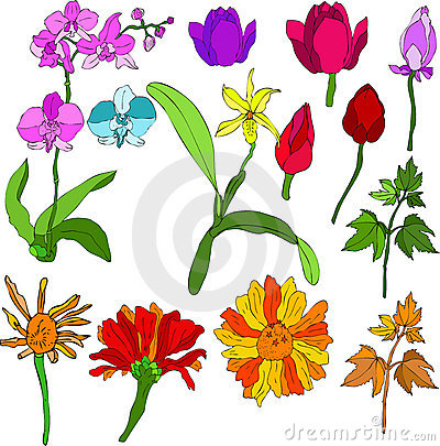 Free Flowers Mix Royalty Free Stock Image - 1918536