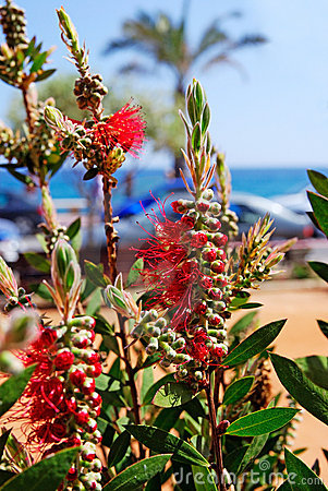 Flowers near beach.