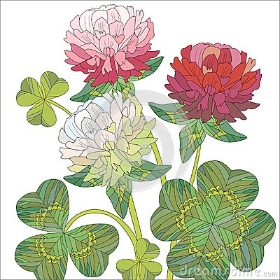 Free Flowers Of Red And White Clover With Leaves. Royalty Free Stock Photography - 111819117
