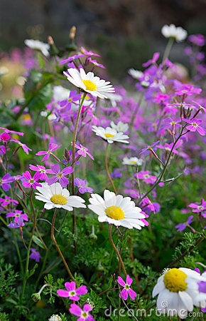 Free Flowers Of Spring Stock Photography - 4227802