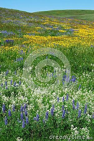 Hillside Wild Flowers Free Stock Photos Stockfreeimages