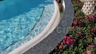Flowers outside at the edge of the pool. And the trunk of a palm tree stock footage