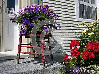 Flowers Outside House