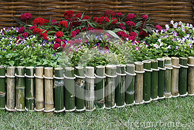 Flowers Over Bamboo Fence Stock Photo Image 41446577