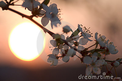 Flowers over sunset