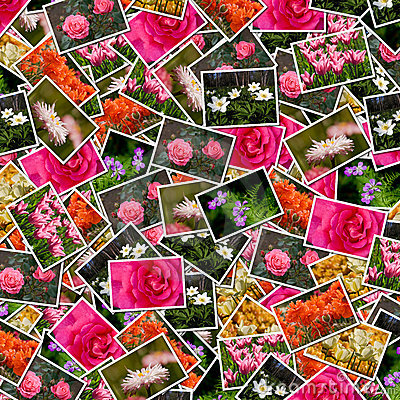 Flowers photos background