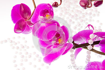 Flowers of pink  orchid and beads from white pearls