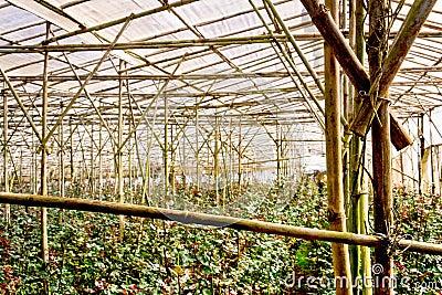 Flowers plantation in Da Lat, Vietnam