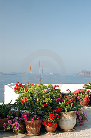 Flowers in pots over sea
