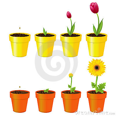 Flowers In Pots. Vector
