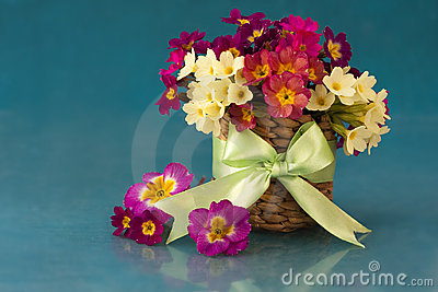 Flowers in the primroses in basket