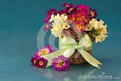 Flowers in the primroses in basket