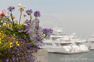 Flowers and private luxury yachts