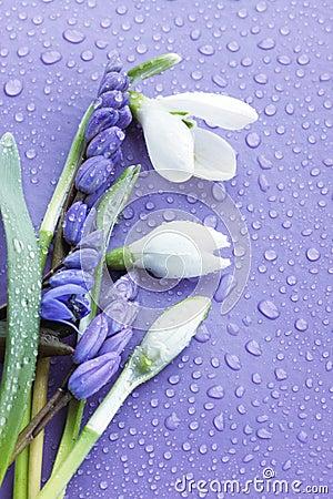 Flowers on the purple