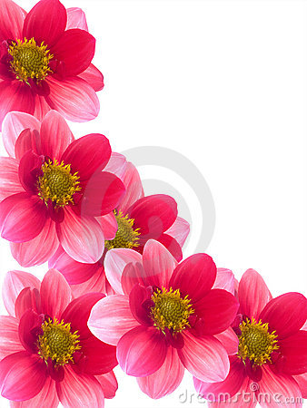 Flowers with red and pink petals