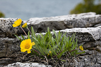Flowers on the rocks