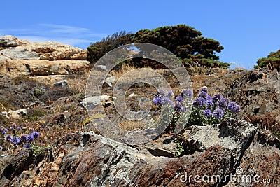 Flowers in rocky landscape