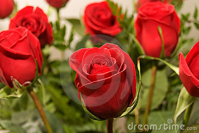 Flowers rose 07