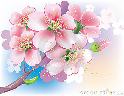 Flowers of sakura