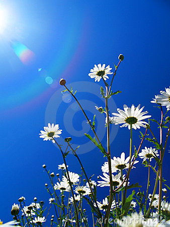 Free Flowers Seeking The Sun Royalty Free Stock Photography - 771007