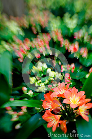 Flowers in selective focus
