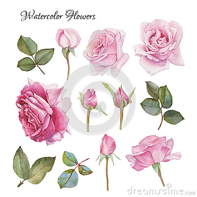 Free Flowers Set Of Hand Drawn Watercolor Roses And Leaves Stock Photography - 67144402