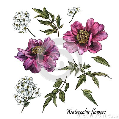 Free Flowers Set Of Watercolor Purple Peonies And White Jasmine Royalty Free Stock Photography - 122304997