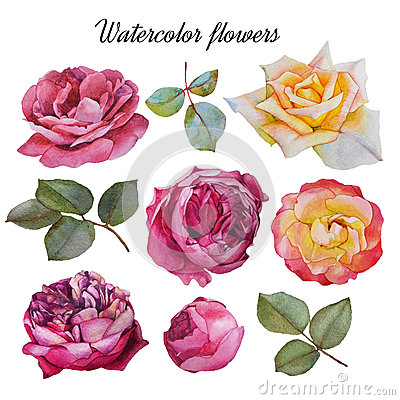 Free Flowers Set Of Watercolor Roses And Leaves Stock Image - 60358501