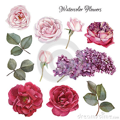 Free Flowers Set Of Watercolor Roses And Lilac Stock Photography - 74493382