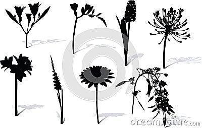 Flowers shape and shadow.
