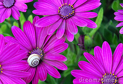 Flowers with a snail